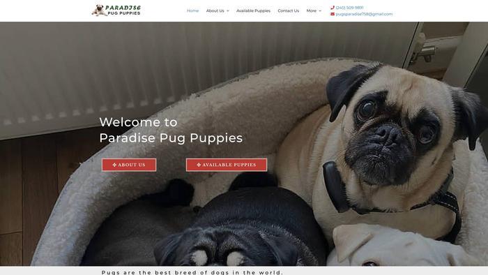 Paradisepugpuppies.com - Pug Puppy Scam Review