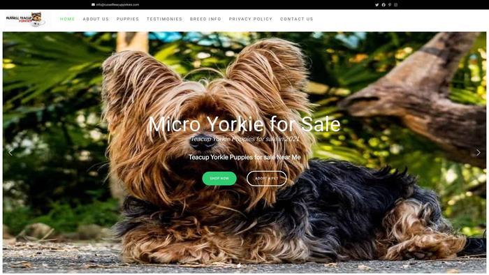Russellteacupyorkies.com - Yorkshire Terrier Puppy Scam Review