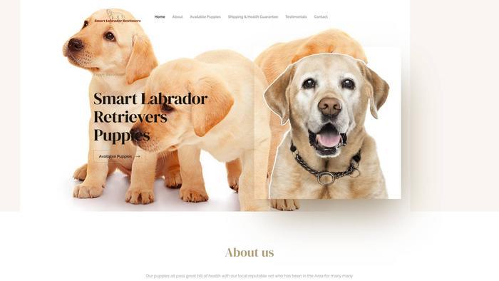 Smartlabradorretrieverpuppieshome.com - Golden Retriever Puppy Scam Review