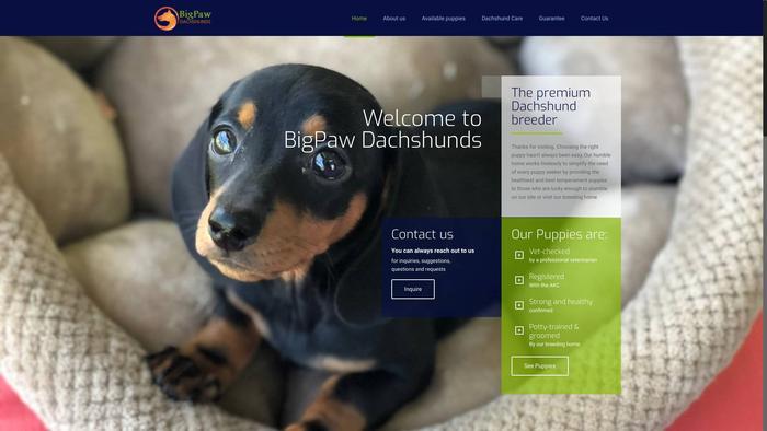 Bigpawdachshunds.com - Dachshund Puppy Scam Review