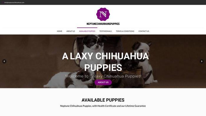 Neptunechihuahuas.com - Chihuahua Puppy Scam Review