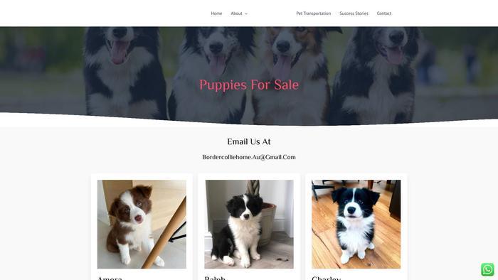 Splendidbordercollies.com - Bordercollie Puppy Scam Review