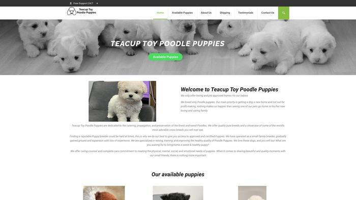 Teacuptoypoodlepuppies.com - Poodle Puppy Scam Review