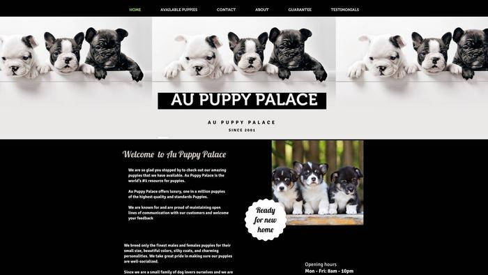 Aupuppypalace.com - Australian Shepherd Puppy Scam Review