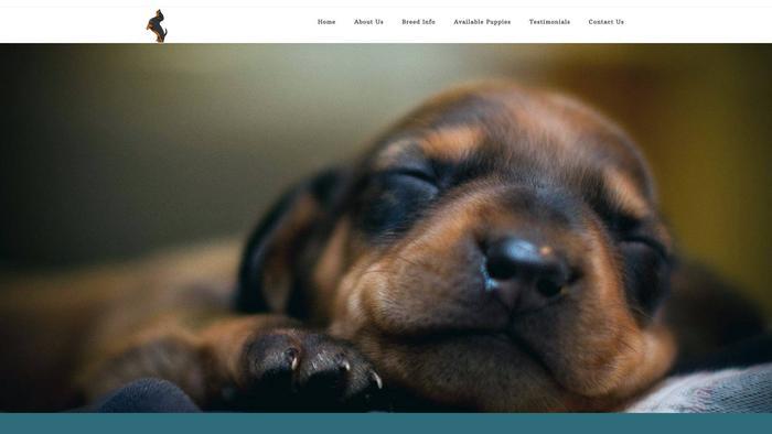 Goldendachshundpuppies.com - Dachshund Puppy Scam Review