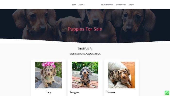 Msdachshunds.com - Dachshund Puppy Scam Review