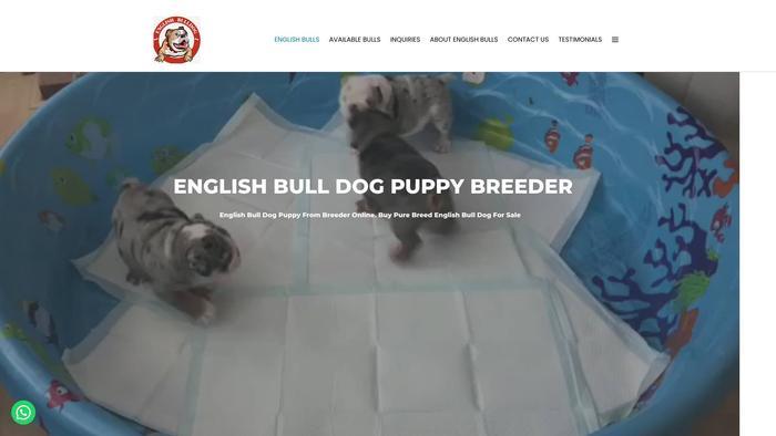 Adorableenglishbulls.com - English Bulldog Puppy Scam Review