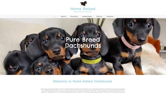 Homeraiseddachshundpuppies.com - Dachshund Puppy Scam Review