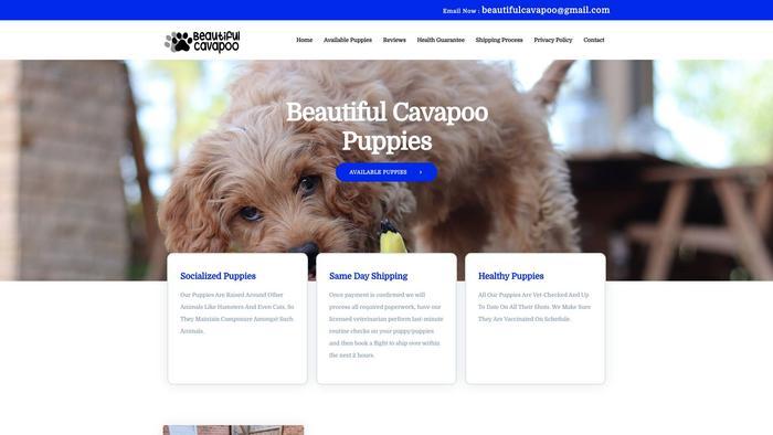Beautifulcavapoopuppies.com - Cavapoo Puppy Scam Review