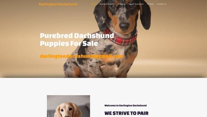 Darlingtondachshund.com - Dachshund Puppy Scam Review