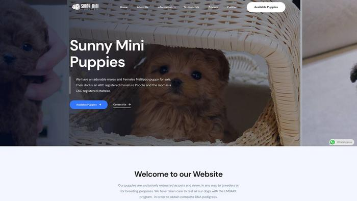 Sunnyminipuppies.com - Maltipoo Puppy Scam Review