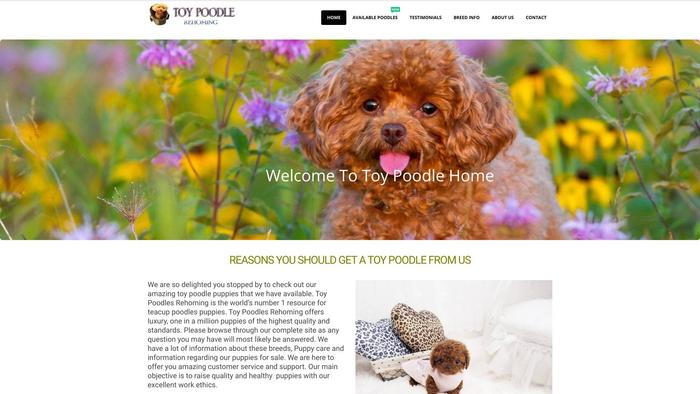 Toypoodlerehoming.com - Poodle Puppy Scam Review