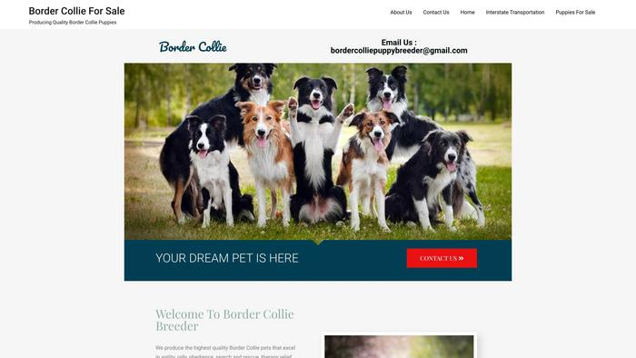 Bordercolliepuppybreeder.com - Bordercollie Puppy Scam Review