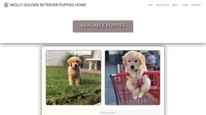 Mollygoldenretrieverpuppies.com - Golden Retriever Puppy Scam Review