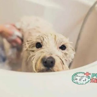 Bathing a dog best smelling dog shampoo