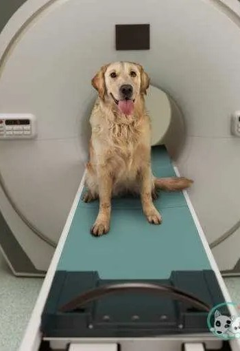 Dog MRI how much do dog x-rays cost