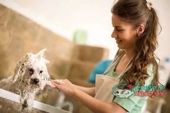 Professional dog showering best smelling dog shampoo