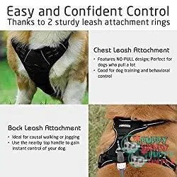 Rabbitgoo Front Range - best dog harness to stop pulling 1
