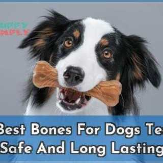 10 Best Bones For Dogs Teeth Safe And Long Lasting