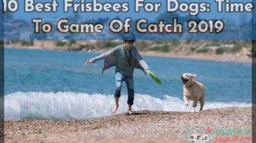 10 Best Frisbees For Dogs Time To Game Of Catch 2019