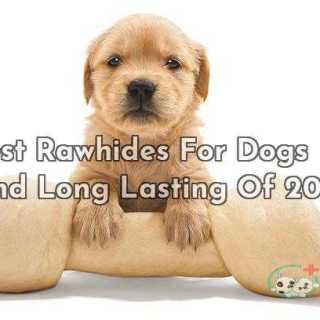 10 Best Rawhides For Dogs Safe And Long Lasting Of 2019