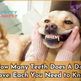 How Many Teeth Does A Dog Have Each You Need to Know