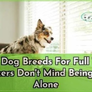 Best Dog Breeds For Full Time Workers Dont Mind Being Left Alone