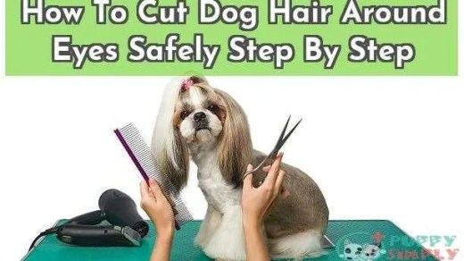 How To Cut Dog Hair Around Eyes Safely Step By Step