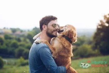 guy and his dog golden retriever nature - best dog breeds s and pictures best dog breeds for full time workers