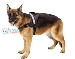 EXPAWLORER Big Dog Harness Soft