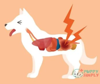 Common Causes Of Constipation In Dogs