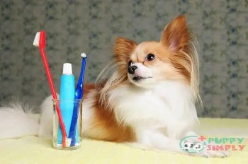 Factors You Should Consider Before You Buying Toothbrushes For Dogs