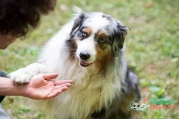 Can I Punish My Dog For Barking?