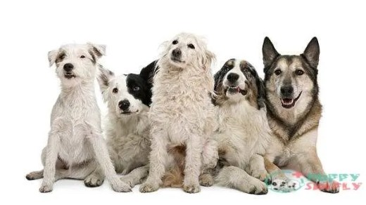 best mixed dogs breeds