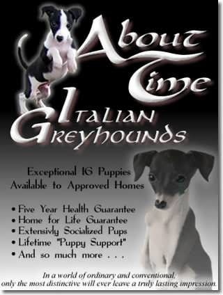About Time Italian Greyhounds