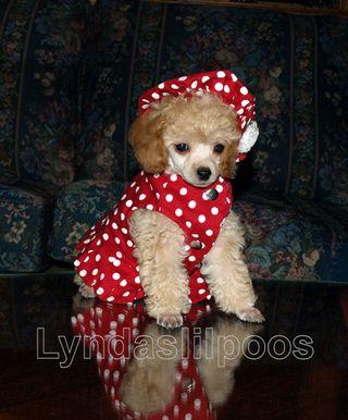 Lyndas Lil Poos