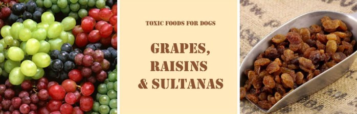Grapes and sultanas are toxic for dogs
