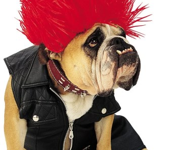 dog halloween costume punk rocker
