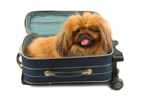 dog in carrier for plane