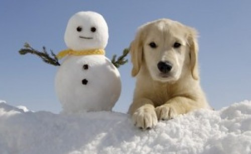 Pic of a snowman and puppy