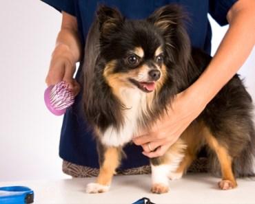 grooming dog at home
