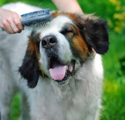 dog getting brushed