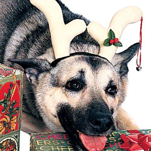 dog wearing reindeer antlers