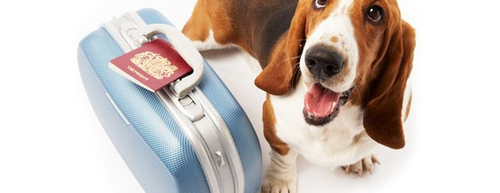 basset hound and a suitcase