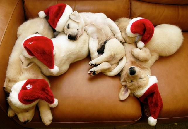 puppies wearing santa hats
