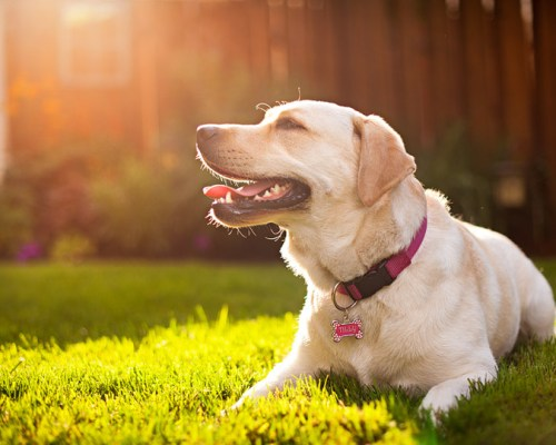dog smiling in the sun