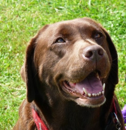 Smiling Dogs 7