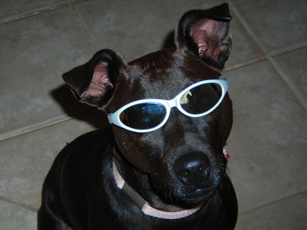 You gotta love a dog that's slick enough to wear shades