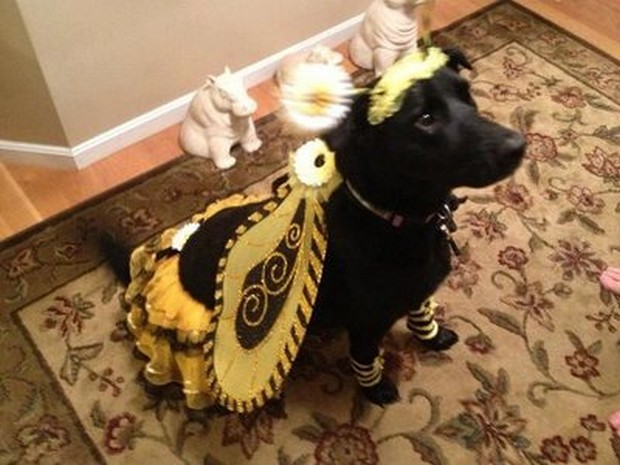 Bee_Costumes_4