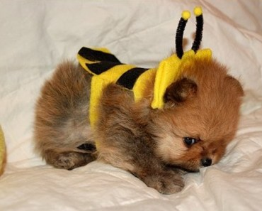 A Gallery of Dogs Wearing Bumble Bee Costumes